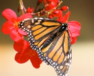 Butterfly by Dave