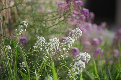 Bunny's fav flowers