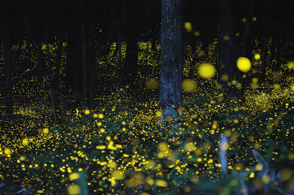 Dazzling Fireflies Display from dazzling website ESCAPEINTOLIFE