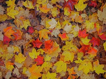 David's Leaves