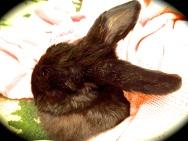 Satine Bunny