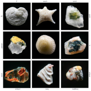 """Every grain of sand in the world is unique and beautiful when viewed through the microscope. If each grain of sand is so beautiful and unique, imagine how beautiful and unique each person is?"" Gary Greenberg"