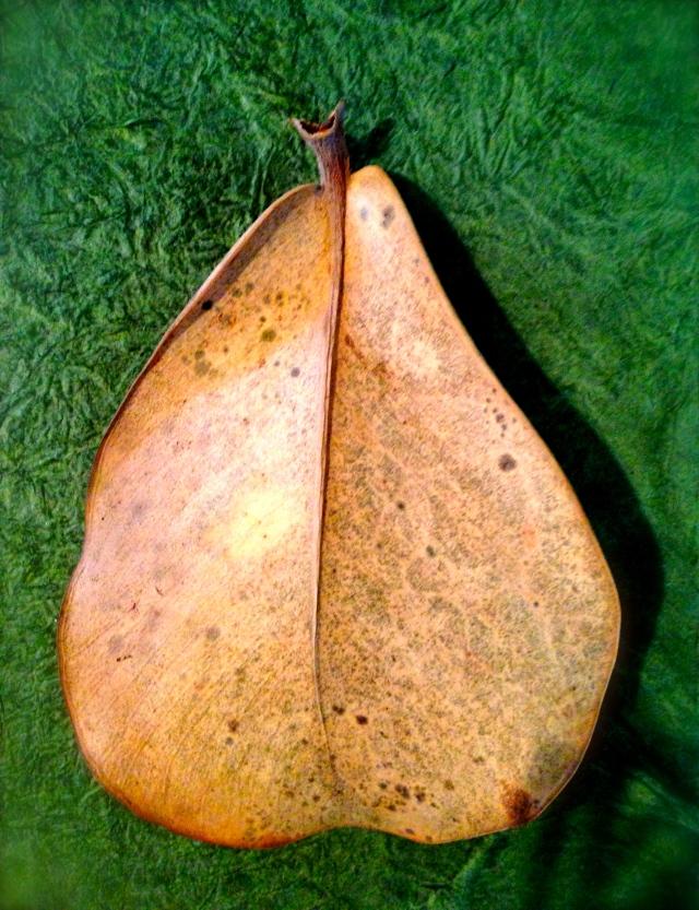 Pear shaped leaf