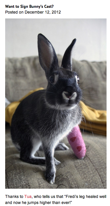 sign bunny's cast