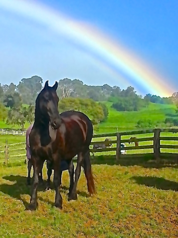 Much thanks to famed trainer Lisa G of Ohana Pet and the amazing hypnotherapist and horse-woman, Dr. Shannon Dominguez of Maui pet therapy for sharing this photo. I miss you gals.