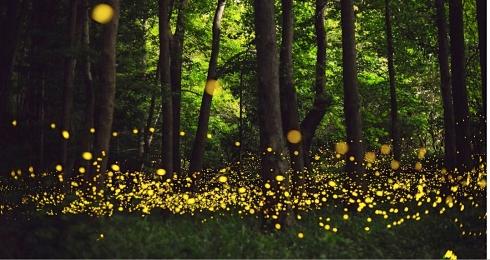 firefly beauty